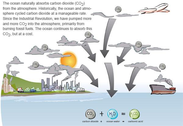 https://spikko.files.wordpress.com/2011/03/ocean-acidification.jpg?w=600&h=412